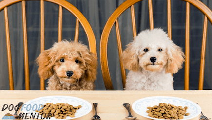 Blue Buffalo Company Dog Food Review