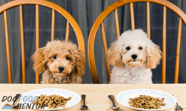 Nutra-Nuggets: Super Premium Pet Food for Superior Health